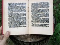 knjiga-na-panju3.jpg